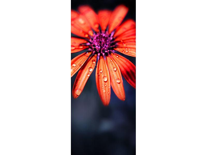 Türtapete Colored Gänseblümchen