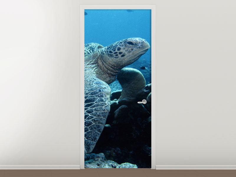 Türtapete Die Meeresschildkröte