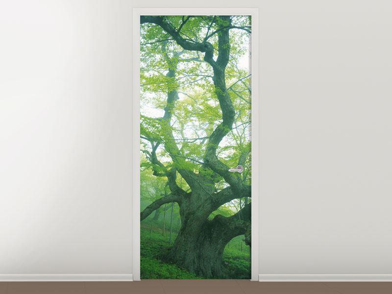 Türtapete Der alte Baum