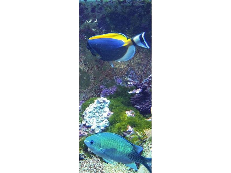 Türtapete Fische