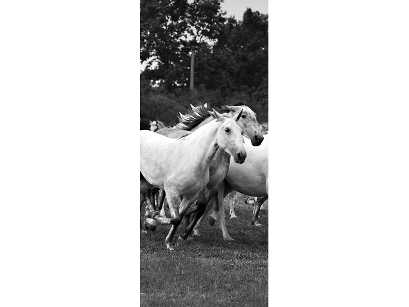 Türtapete Die Mustang Herde