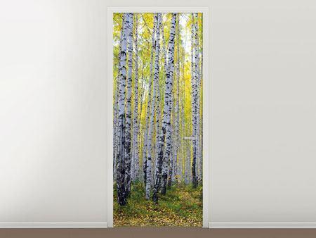 Türtapete Herbstlicher Birkenwald