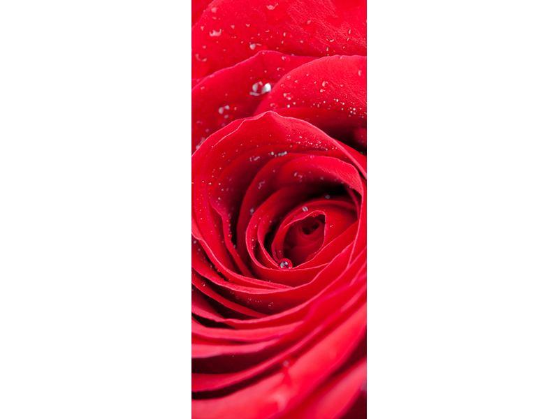 Türtapete Rote Rose im Morgentau