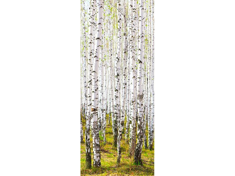 Türtapete Der Birkenwald im Frühling