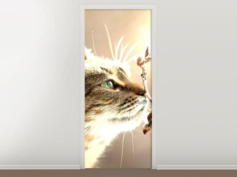Türtapete Die Katze