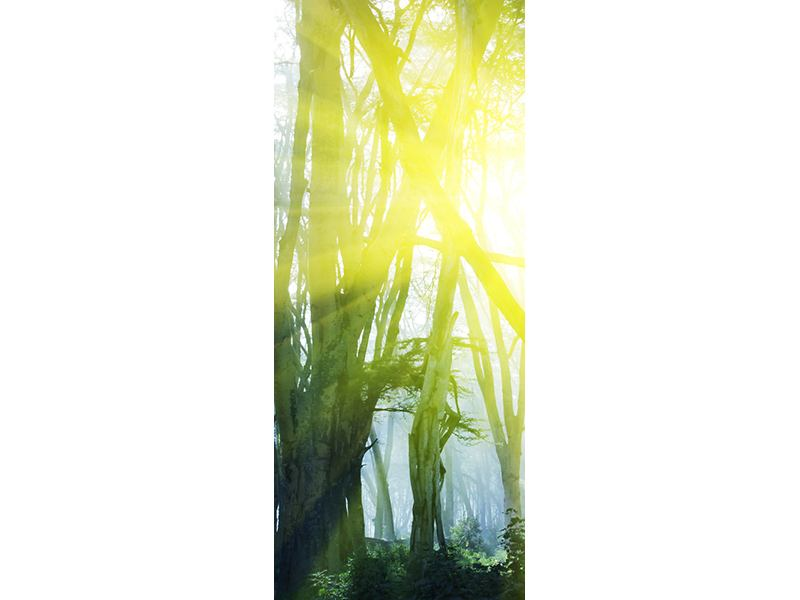 Türtapete Sonnenstrahlen im Wald