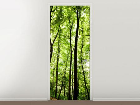 Türtapete Wald