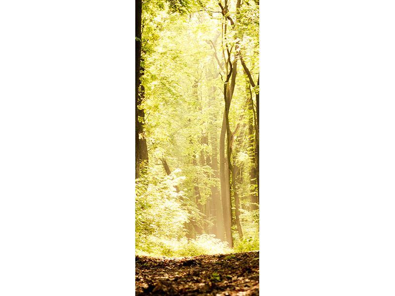Türtapete Sonnenaufgang im Wald