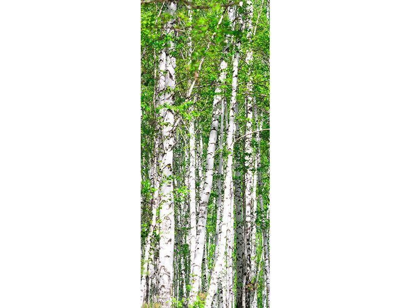 Türtapete Der Birkenwald