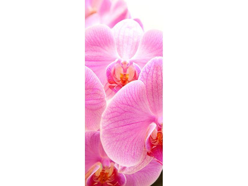 Türtapete Königliche Orchideen