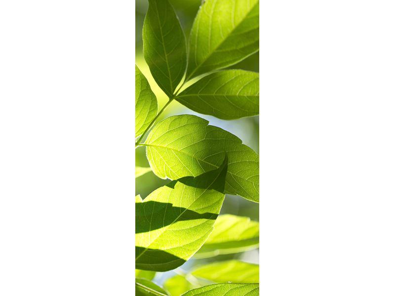 Türtapete Es grünt so grün