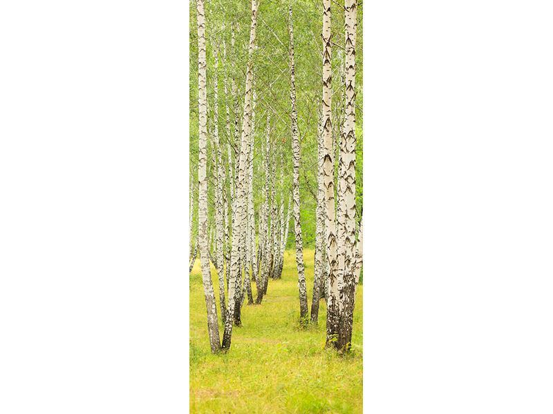 Türtapete Der Birkenwald im Spätsommer