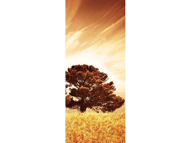 Türtapete Bäume im Lichtspektakel