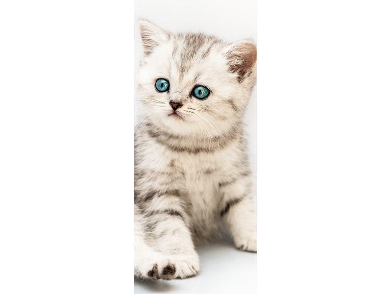 Türtapete Katzenbaby