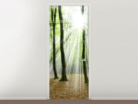 Türtapete Magisches Licht in den Bäumen