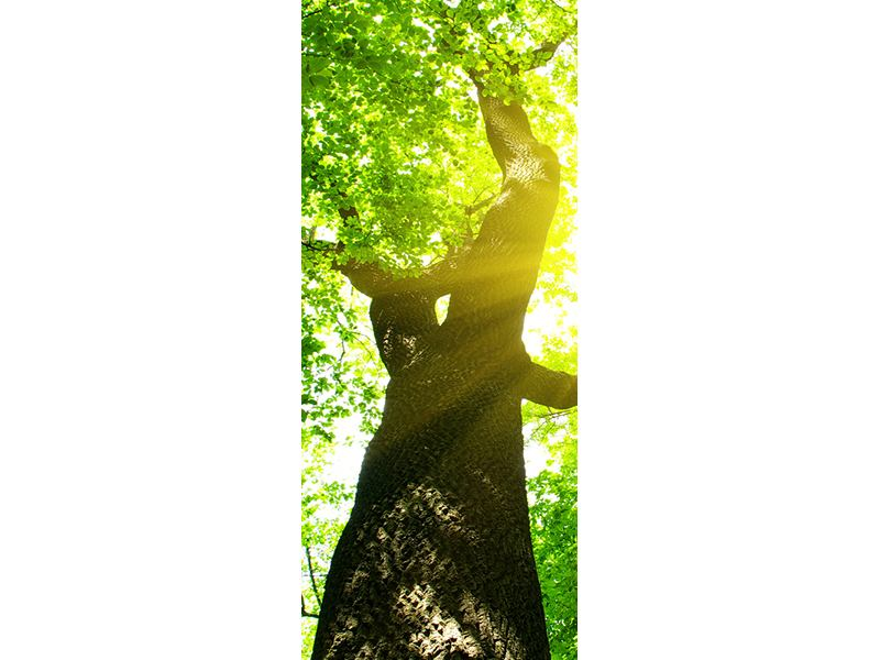 Türtapete Baum