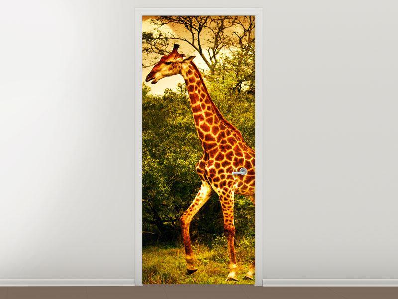 Türtapete Südafrikanische Giraffen