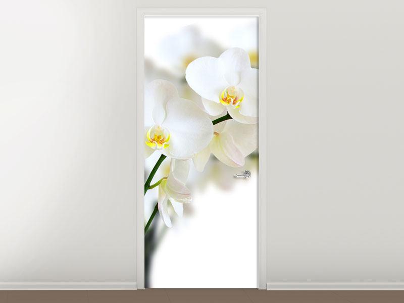 Türtapete Weisse Orchideen