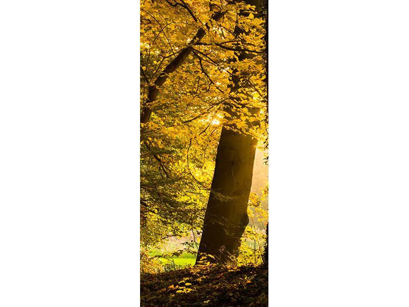 Türtapete Herbstlaub