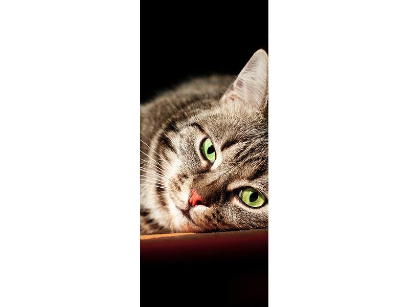 Türtapete Entspannte Katze