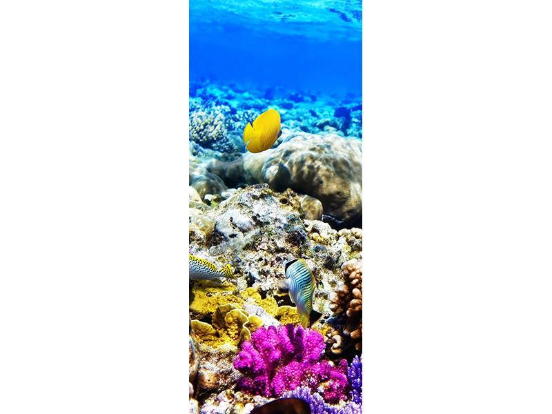 Türtapete Fischaquarium