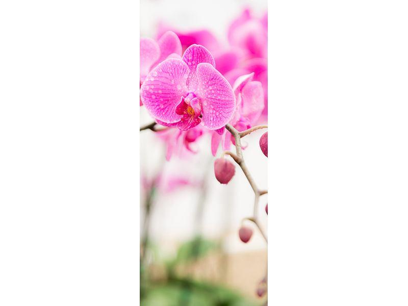 Türtapete Gestreifte Orchideenblüten in Rosa