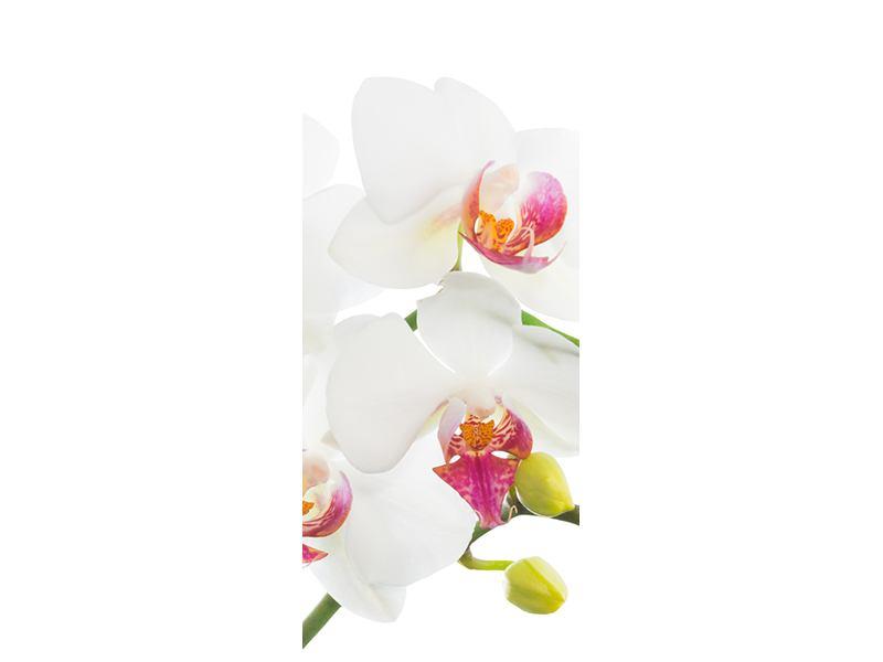 Türtapete Orchideenliebe