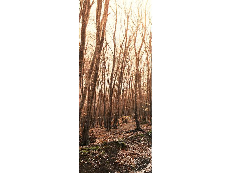 Türtapete Der kahle Wald