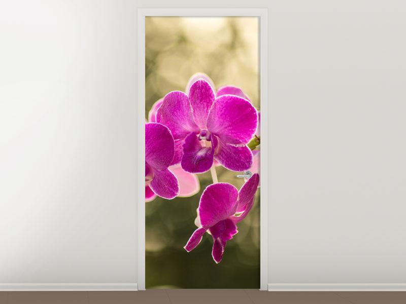 Türtapete Orchideen Violett