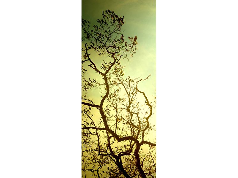Türtapete Bäume im Herbst