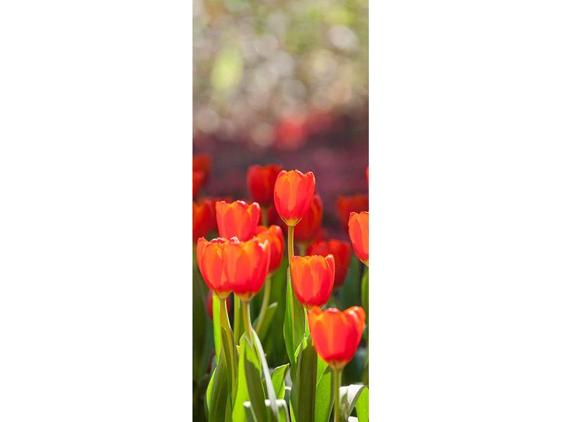 Türtapete Das rote Tulpenbeet