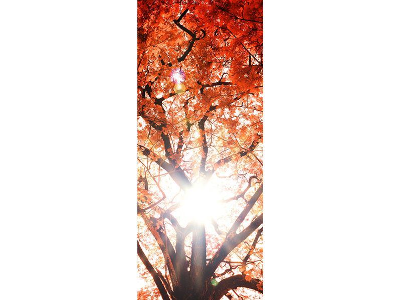 Türtapete Herbstlicht