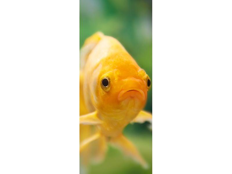Türtapete Der Fisch