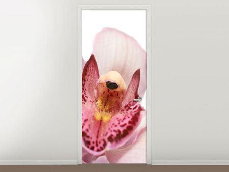 Türtapete Orchideenblüte XXL