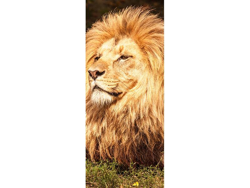 Türtapete Löwe