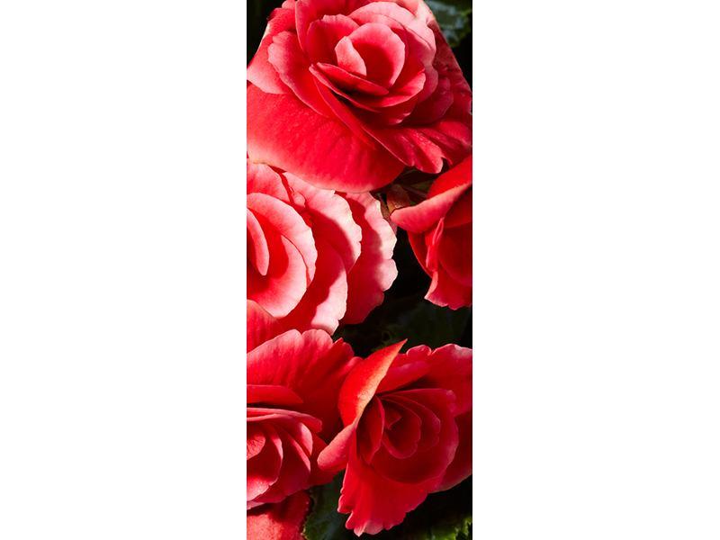 Türtapete Rote Rosen