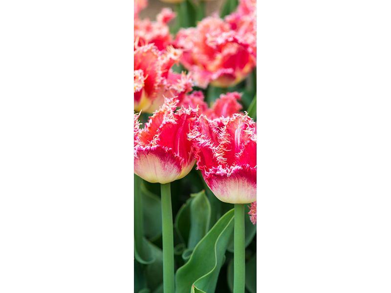 Türtapete Die Tulpenwiese