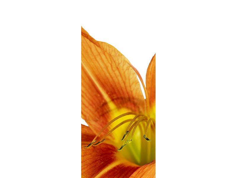 Türtapete Die Tiger-Lilie