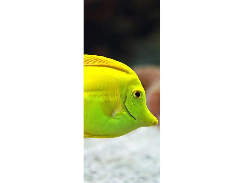 Türtapete Segelflossendoktorfisch