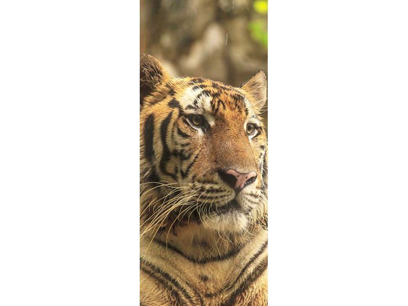 Türtapete Tiger