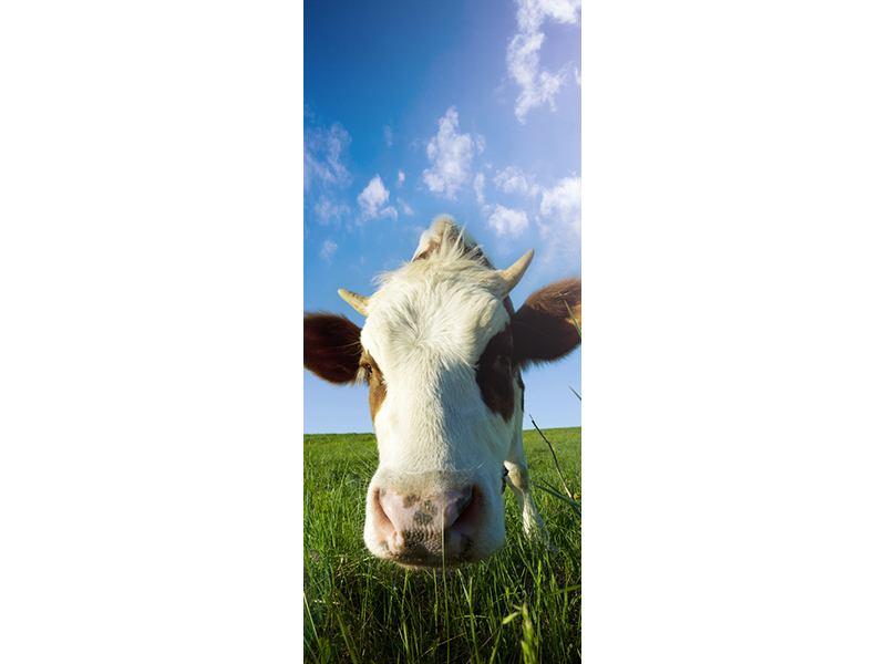 Türtapete Die Kuh