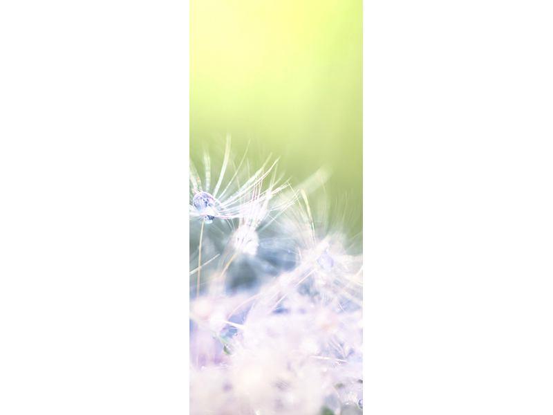 Türtapete Pusteblume XL im Morgentau