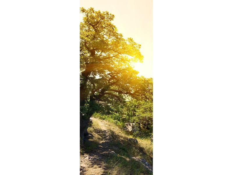 Türtapete Sonnenuntergang in der Natur