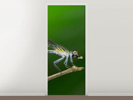 Türtapete Die Libelle
