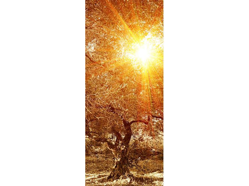 Türtapete Olivenbäume im Herbstlicht
