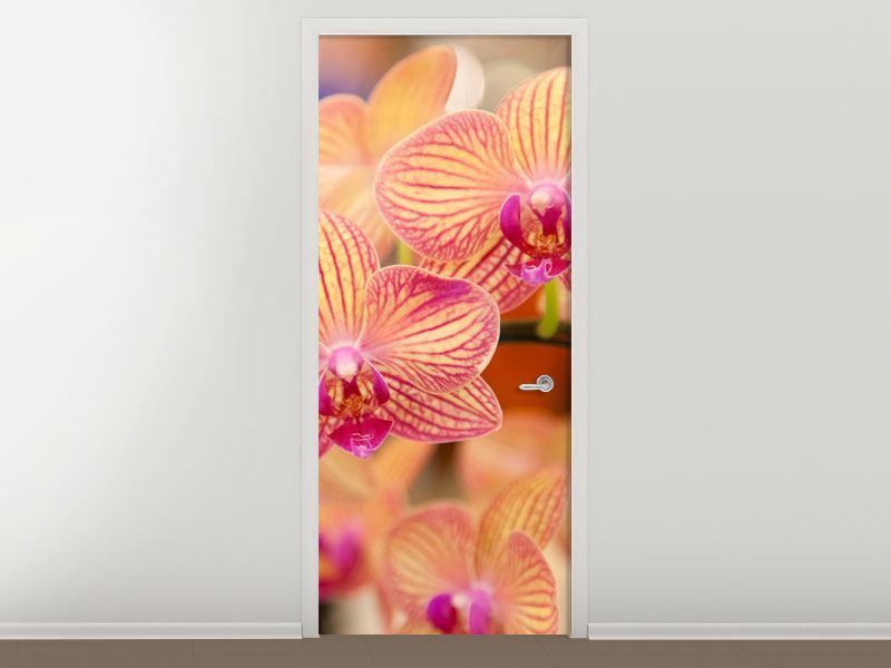 Türtapete Exotische Orchideen