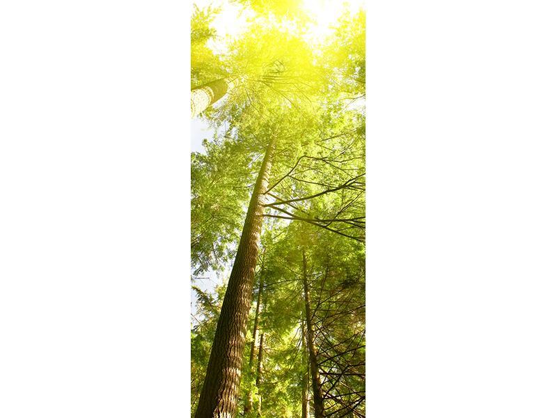 Türtapete Baumkronen in der Sonne