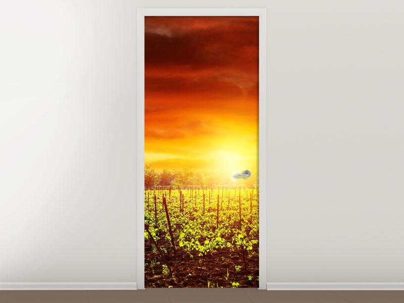 Türtapete Der Weinberg bei Sonnenuntergang