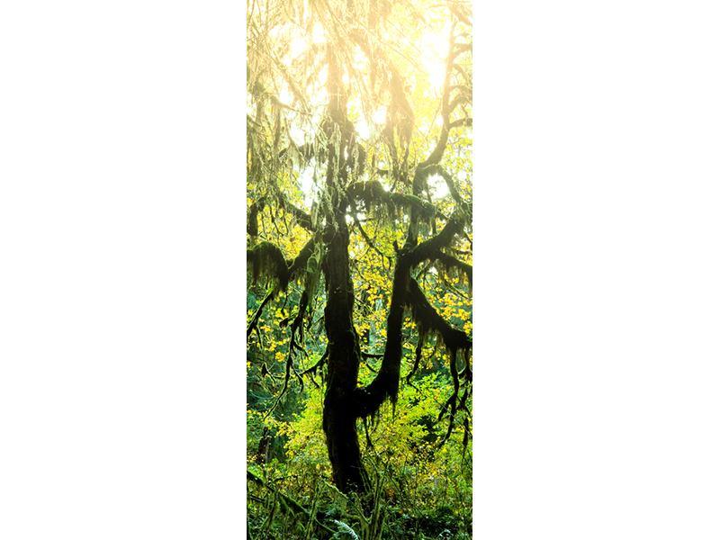 Türtapete Verträumter Wald
