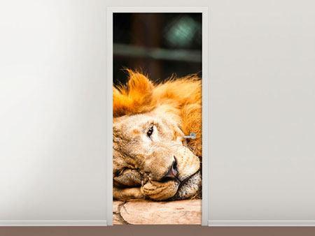 Türtapete Entspannter Löwe